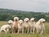 Kutyáink